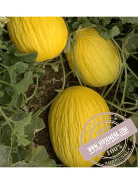 Давут Бей F1 (Davut Bay F1) семена дыни сортотипа Кишлик Enza Zaden, оригинальная упаковка (500 семян)