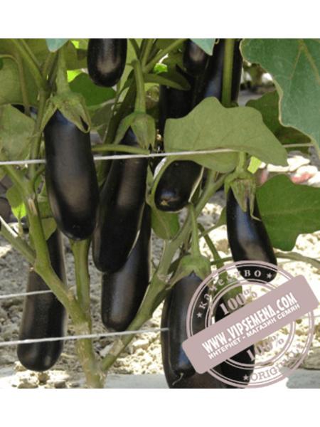 Дестан F1 (Destan F1)  семена баклажана Enza Zaden, оригинальная упаковка (10 грамм)