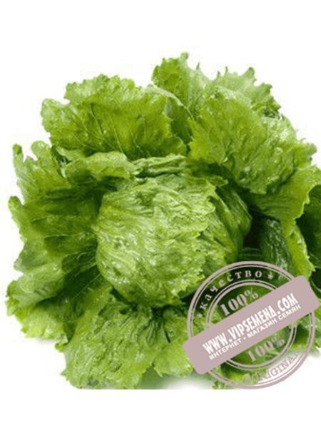 Диамантинас (Diamantinas) семена салата кочанного типа Айсберг Rijk Zwaan, оригинальная упаковка (1000 семян драже)