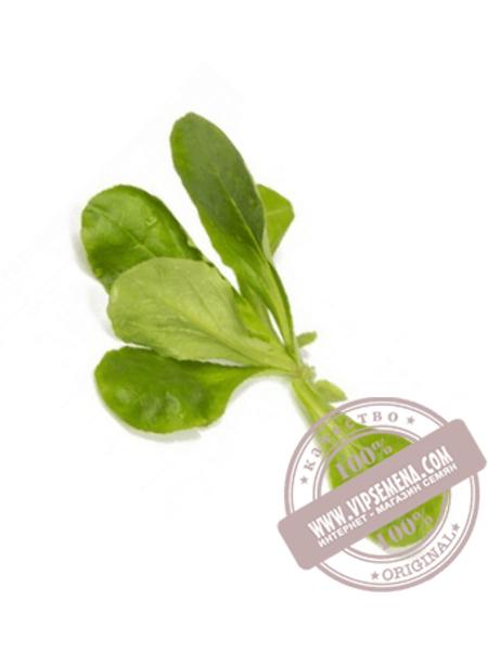 Диона (Diona) семена салата маслянистого типа Саланова Rijk Zwaan, оригинальная упаковка (1000 семян)