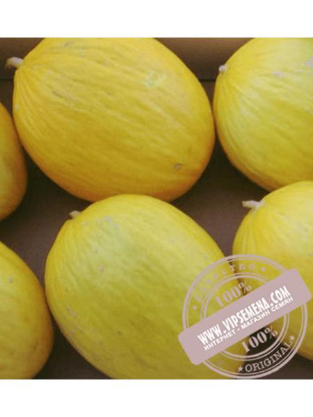 Дукрал F1 (Ducral F1) семена дыни типа Канарская желтая (Аморилло) Rijk Zwaan, оригинальная упаковка (100 семян)