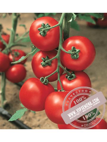 Джадело F1 (Jadelo F1) семена томата индетерминантного красного Vilmorin, оригинальная упаковка (500 семян)