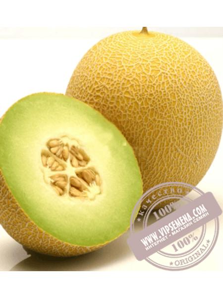 Джукар F1 (Jucar F1) семена дыни типа Галия Rijk Zwaan, оригинальная упаковка (100 семян)