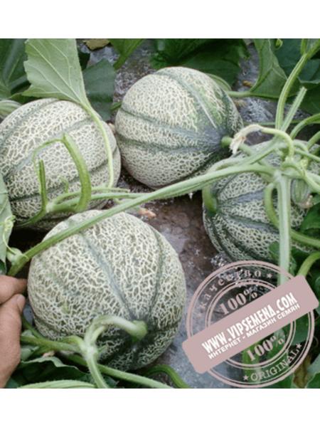 Эминенза F1 (Eminenza F1) семена дыни типа Итальянская сетчатая Enza Zaden, оригинальная упаковка (500 семян)