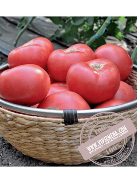 Эсмира F1 (Esmira F1) семена томата индетерминантного розового Rijk Zwaan, оригинальная упаковка (100 семян)
