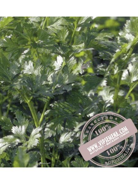 Фелиция (Felicia) семена петрушки гладко листовой Rijk Zwaan, оригинальная упаковка (10 грамм)