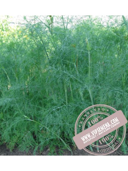 Голдкрон (Goldkron) семена укропа Enza Zaden, оригинальная упаковка (100 грамм)