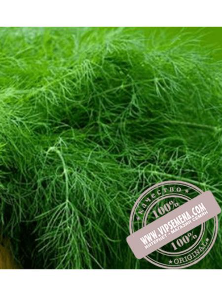 Грин Сливс (Green Slivs) семена укропа Enza Zaden, оригинальная упаковка (250 грамм)