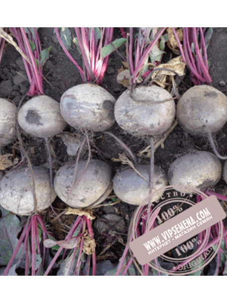 Камаро F1 (Kamaro F1) семена свеклы столовой Vilmorin, оригинальная упаковка (100000 семян)