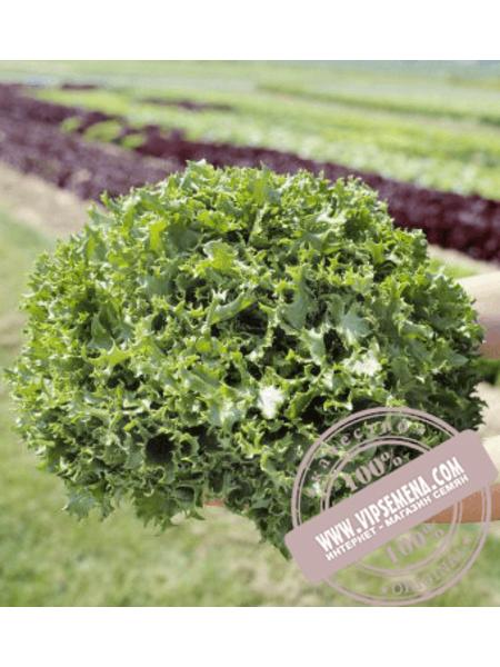 Канкан (Kankan) семена салата типа Фризе Hazera, оригинальная упаковка (5 грамм)