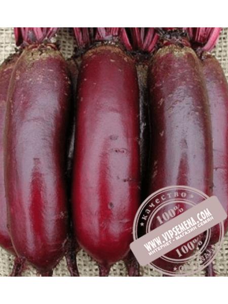 Карилон (Сarillon) семена свеклы столовой цилиндрической Rijk Zwaan, оригинальная упаковка (100000 семян) PR