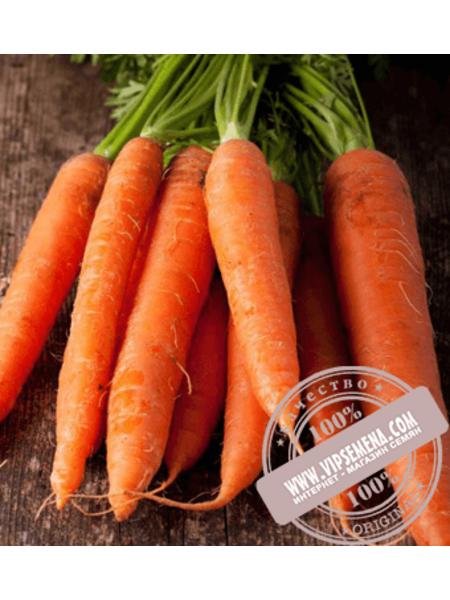 Каротан (Karotan) семена моркови типа Флакке Rijk Zwaan, оригинальная упаковка (50 грамм)