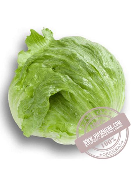 Картагенас (Cartahenas) семена салата кочанного типа Айсберг Rijk Zwaan, оригинальная упаковка (1000 семян драже)