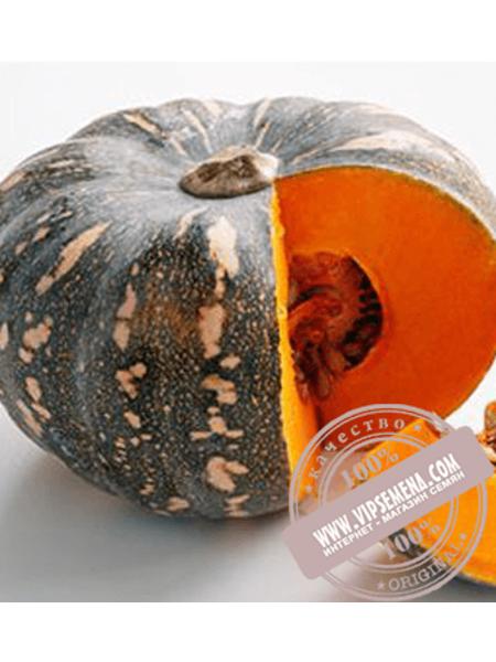 Хоншу F1 (Honshy F1) семена тыквы типа Кент Enza Zaden, оригинальная упаковка (500 семян)