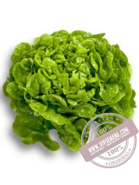 Китония (Kitonia) семена салата Дуболистного типа Rijk Zwaan, оригинальная упаковка (1000 семян драже)