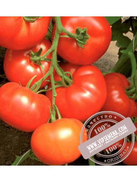 Кларабелла F1 (Clarabella F1) семена томата индетерминантного Rijk Zwaan, оригинальная упаковка (100 семян)