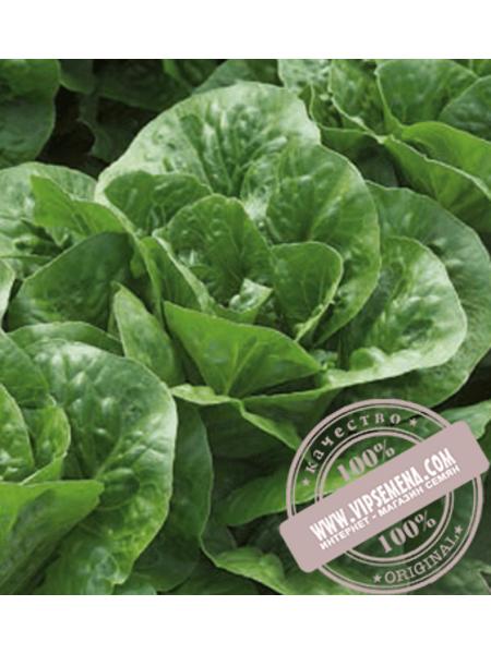 Клаудиус (Claudius)  семена салата типа Ромен Rijk Zwaan, оригинальная упаковка (1000 семян драже)