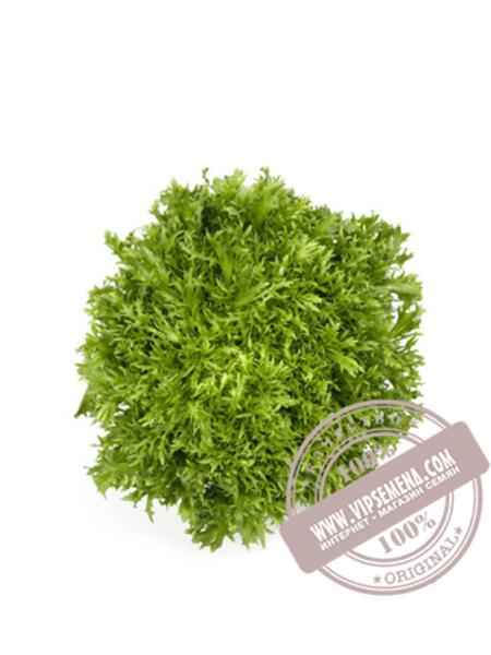 Корби (Corbi) семена салата типа Эндивий Rijk Zwaan, оригинальная упаковка (1000 семян драже)