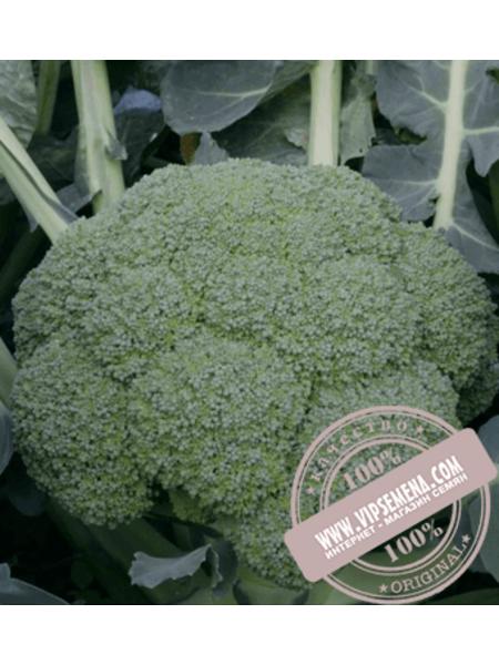 Квинта F1 (Kvinta F1) семена брокколи Takii Seeds, оригинальная упаковка (2500 семян)