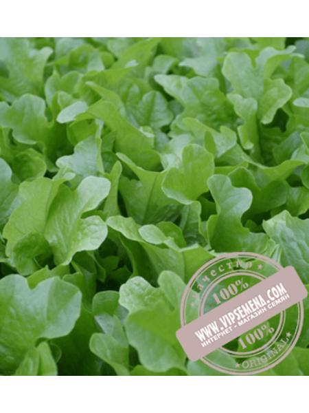 Ланселот (Lanselot) семена салата типа Батавия Enza Zaden,оригинальная упаковка (5000 семян)