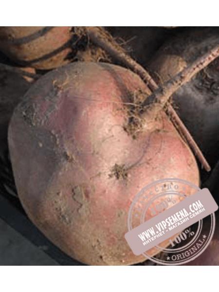 Либеро (Libero) семена свеклы столовой округлой Rijk Zwaan, оригинальная упаковка (25000 семян)