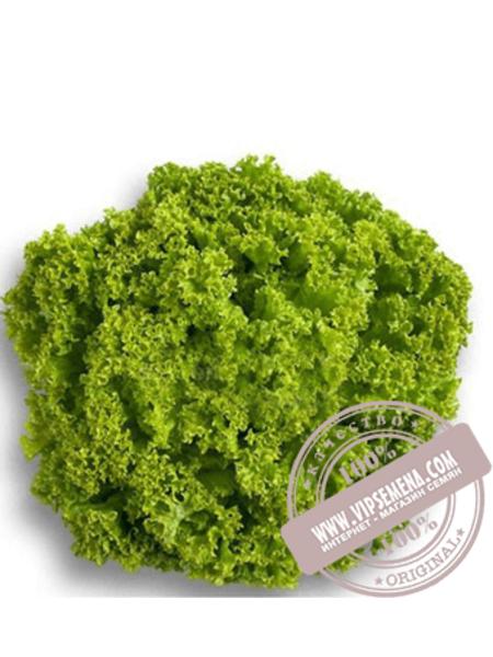 Локарно (Locarno) семена салата полукочанного типа Лолла Бионда Rijk Zwaan, оригинальная упаковка (1000 семян)