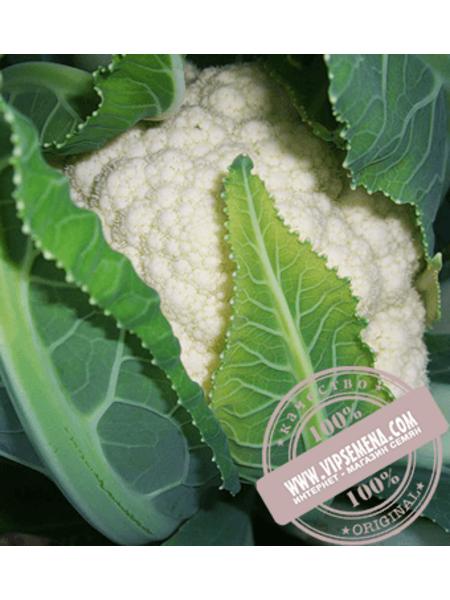 Локрис F1 (Lokris F1) семена цветной капусты Vilmorin, оригинальная упаковка (1000 семян)