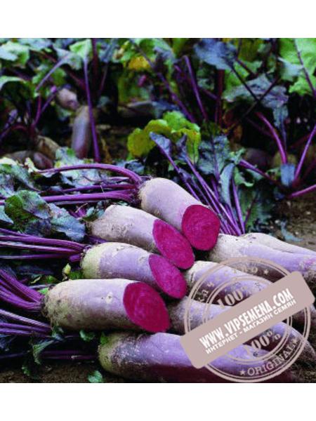 Ломако (Lomaco) семена свеклы столовой цилиндрической Rijk Zwaan, оригинальная упаковка (25000 семян) 2,75-3,50
