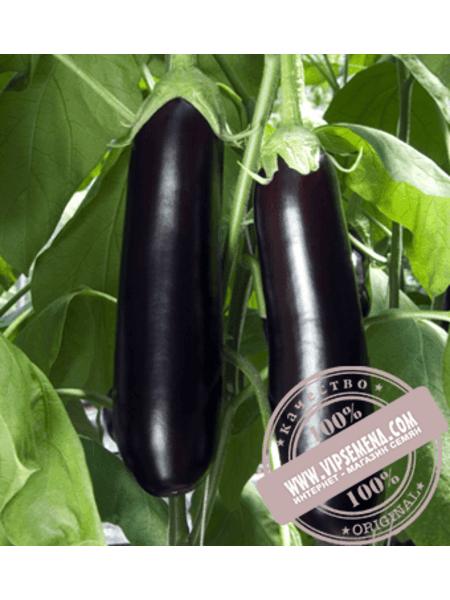 Мадалена F1 (Madalena F1) семена баклажана Vilmorin, оригинальная упаковка (1000 семян)
