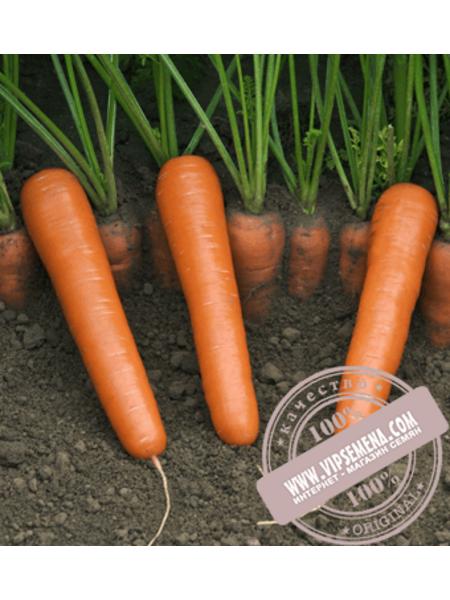 Маэстро F1 (Maestro F1) семена моркови Нантского типа Vilmorin, оригинальная упаковка (100000 семян)