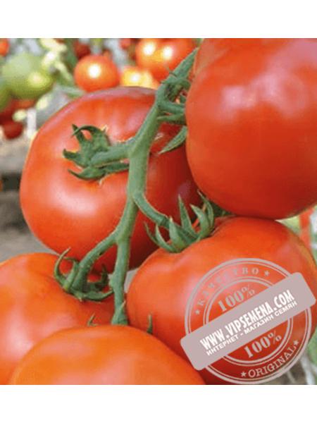 Махитос F1 (Mahitos F1) семена томата индетерминантного Rijk Zwaan, оригинальная упаковка (100 семян)