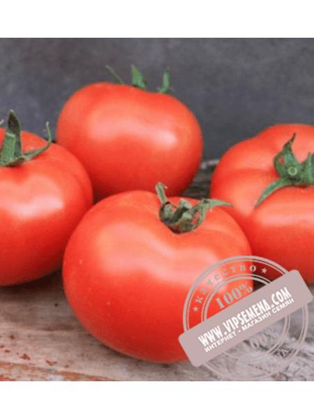 Монсан F1 (Monsan F1) смена томата полудетерминантного для пленочных теплиц Enza Zaden, оригинальная упаковка (500 семян)