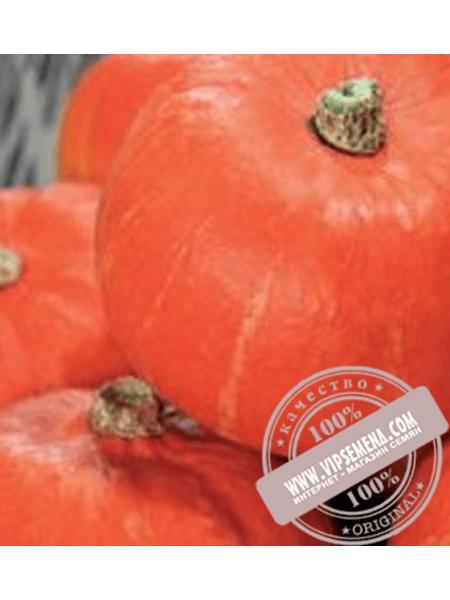 Орандж Саммер F1 (Orange Summer F1) семена тыквы-сквош типа Ишики Кари (Uchiki Kuri) Enza Zaden, оригинальная упаковка (500 семян)