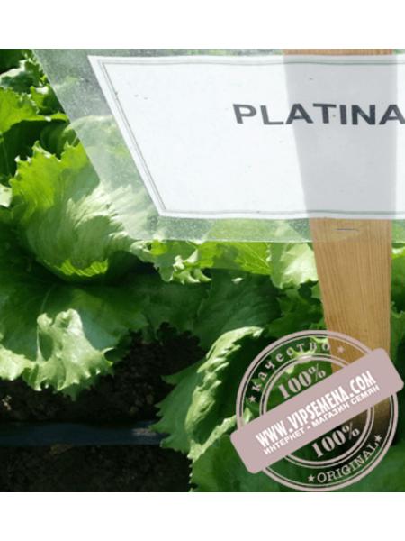 Платинас (Platinas)  семена салата кочанного типа Айсберг Rijk Zwaan, оригинальная упаковка (1000 семян драже)