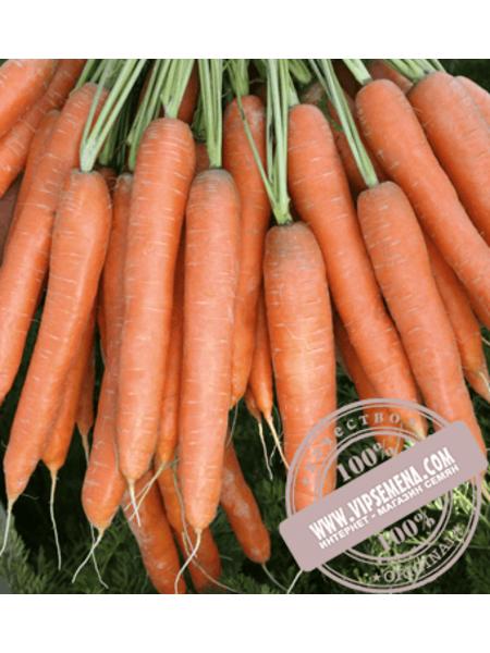 Престо F1( Presto F1) семена моркови Нантского типа Vilmorin, оригинальная упаковка (25000 семян)16/18