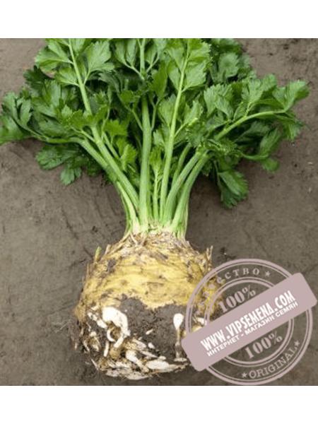 Президент (President) семена сельдерея корнеплодного Rijk Zwaan, оригинальная упаковка (10000 семян)
