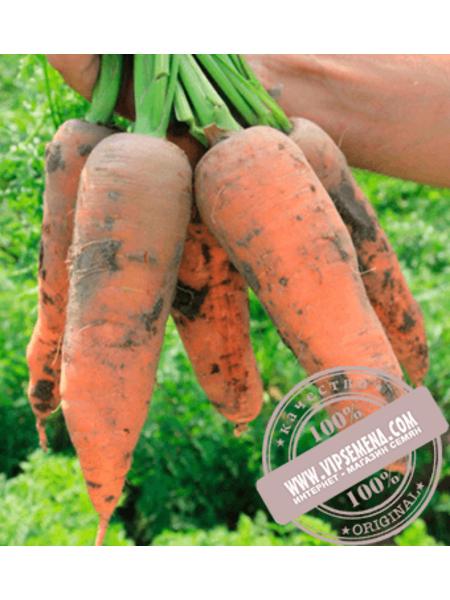 Проминенс F1 (Prominens F1) семена моркови типа Шантане Takii Seeds, оригинальная упаковка (100000 семян)