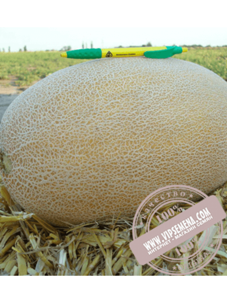 Раймонд F1 (Raimond F1) семена дыни типа Ананас Hazera, оригинальная упаковка (1000 семян)