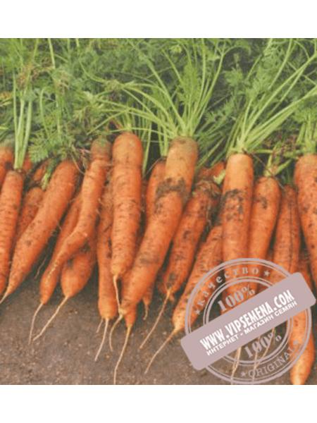 Ред Коред (Red Cored) семена моркови типа Шантане Vilmorin, оригинальная упаковка (100000 семян)