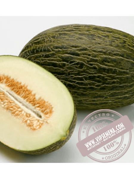 Рикура F1 (Ricura F1) семена дыни типа Пиел де Сапо Rijk Zwaan, оригинальная упаковка (100 семян)