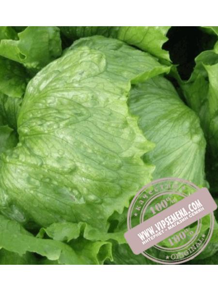 Робинсон (Robinson) семена салата типа Айсберг Hazera, оригинальная упаковка (5 грамм)