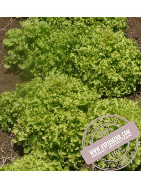 Ронали (Ronali) семена салата дуболистного Hazera, оригинальная упаковка (1000 семян)