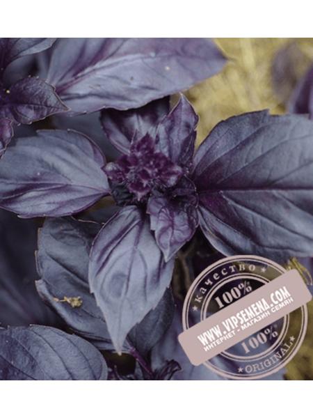 Рози (Rozi)  семена базилика Enza Zaden, оригинальная упаковка (1000 грамм)