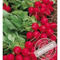 Селеста F1 (Selesta F1) семена редиса Enza Zaden, оригинальная упаковка (250 грамм)