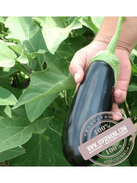 Шарапова F1 (Sharapova F1) семена баклажана Rijk Zwaan, оригинальная упаковка (100 семян)