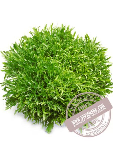 Сигал (Cigal) семена салата типа Эндивий Rijk Zwaan, оригинальная упаковка (1000 семян драже)