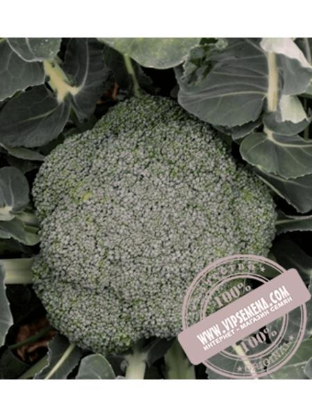 Стромболи F1 (Stromboli F1) семена капусты брокколи Hazera, оригинальная упаковка (2500 семян)