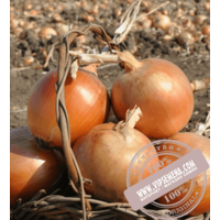 Тареско F1 (Taresko F1) семена лука репчатого Hazera, оригинальная упаковка (250000 семян)