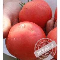ТЕТМ 010 F1 (ТЕТМ 010 F1) семена розового индет. томата Takii Seeds, оригинальная упаковка (250 семян)