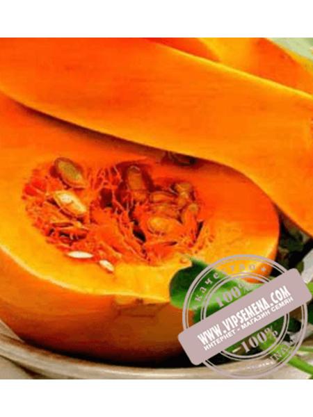 Тиана F1 (Tiana F1) семена тыквы типа Баттернат Enza Zaden, оригинальная упаковка (500 семян)